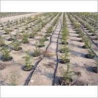 Inline Irrigation System