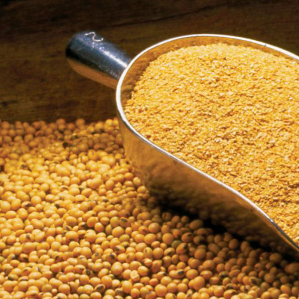Soya Beans Meal available for sale
