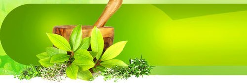 Tulsi Liquid Extracts with Divine Properties and Ginger Oil FOR MANUFACTURING