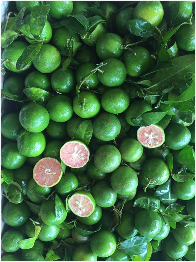 100% Natural Fresh Lime/Fresh Lemon