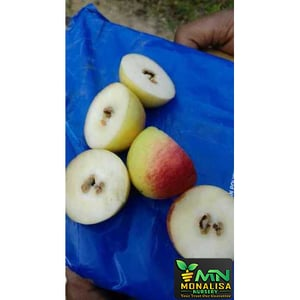 Apple Ber Plant (Seed Less)