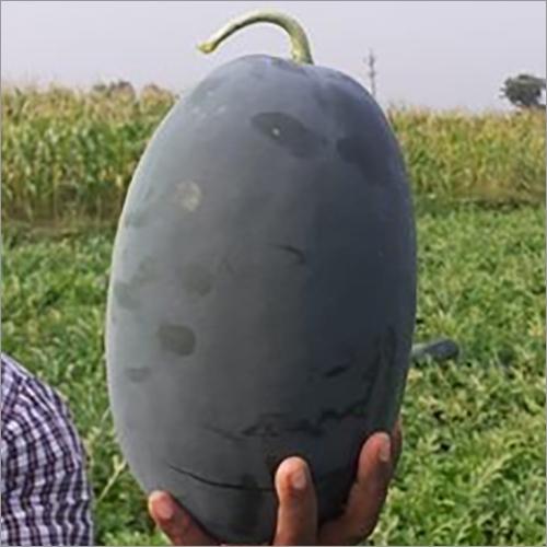 Tiger King F1 Watermelon Seeds