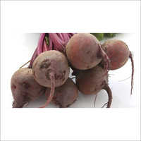 Bhoomi 134 Hybrid F1 Beetroot Seeds