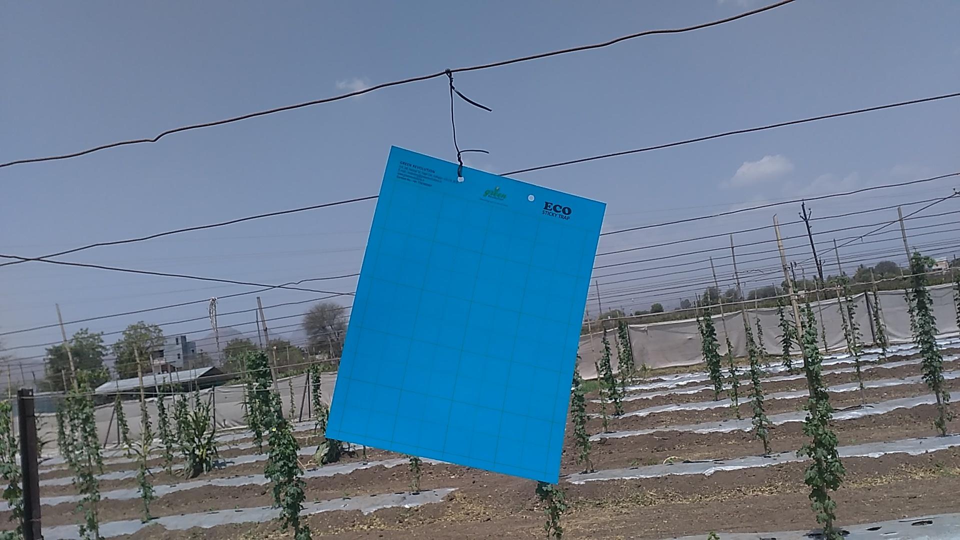 Premium Blue Sticky Trap