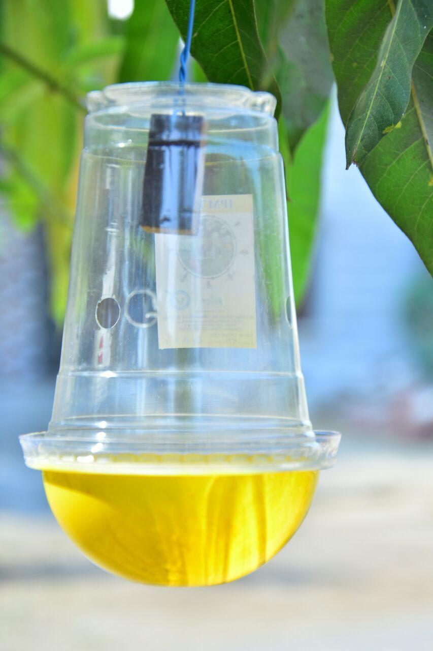 IPM Fruit Fly Pheromone Trap - Easy Fruit Fly Trap