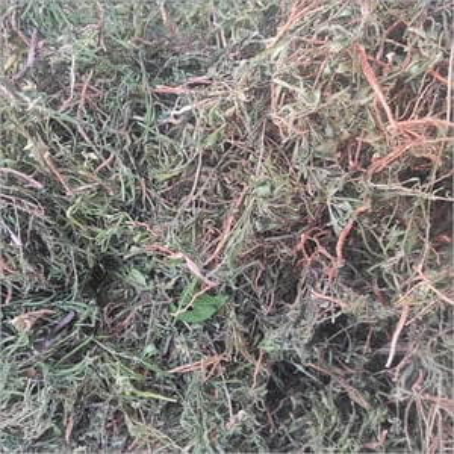 Dry Oru Thamarai Root