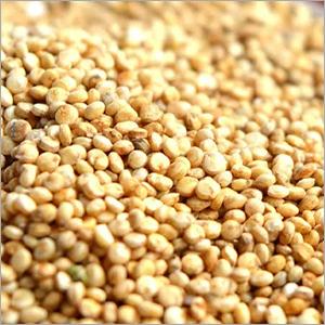Fresh Quinoa Seeds