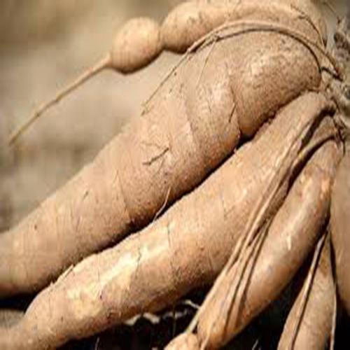 Raw Natural Fresh Cassava