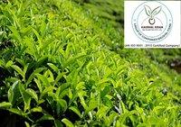 Anjeer Plant