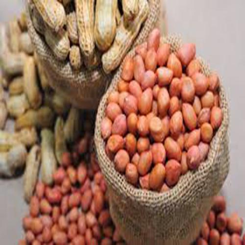 Natural Raw Dried Seed Peanuts