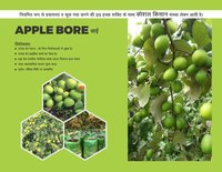 Thai Apple Bor Plant