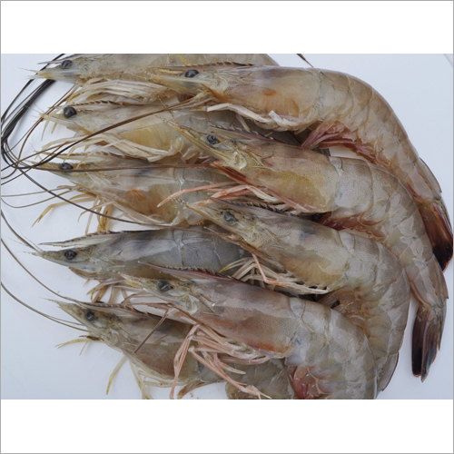 Whole Frozen Shrimp