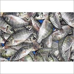 Dry Sea Fish