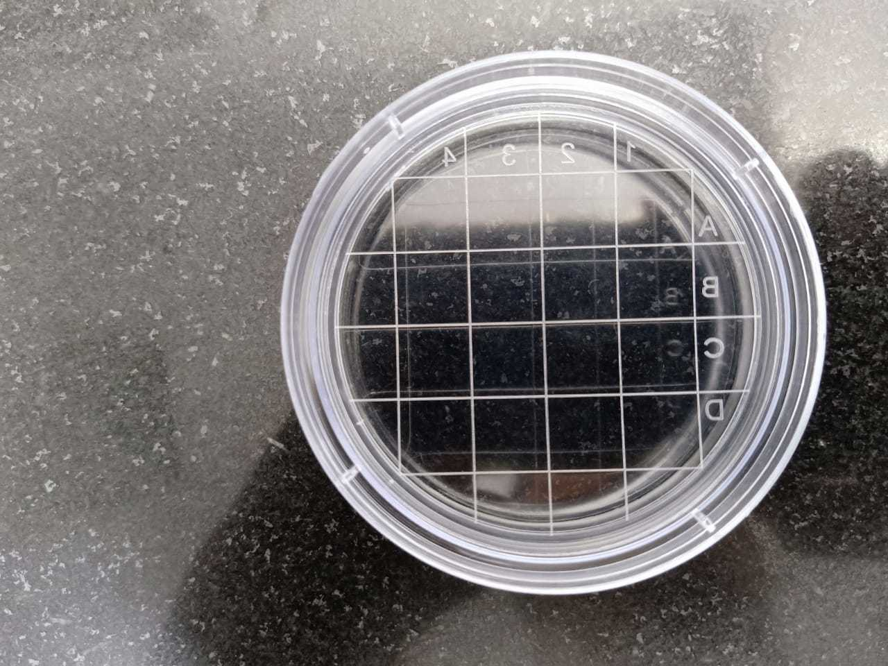 Plastic Petri Dish Sterilization
