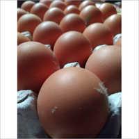 BV380 Hen Eggs