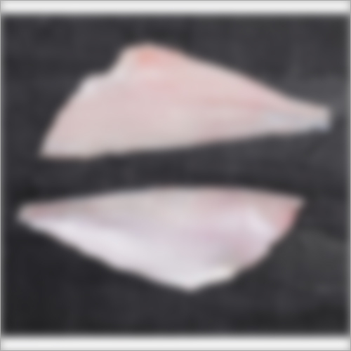 Leather Jacket Fish Fillet