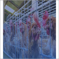 Galvanized Steel Poultry Wire