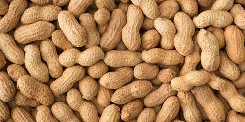 Organic Raw Peanut(Groundnut)