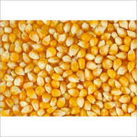 Prime Maize