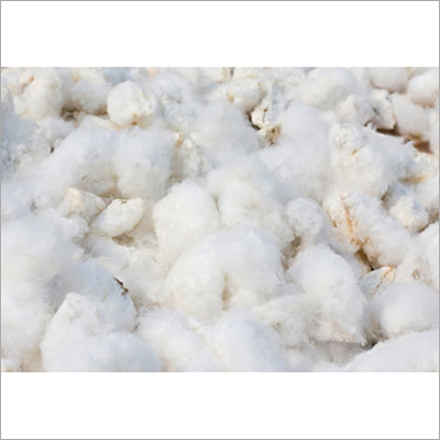 Pure Cotton Seed