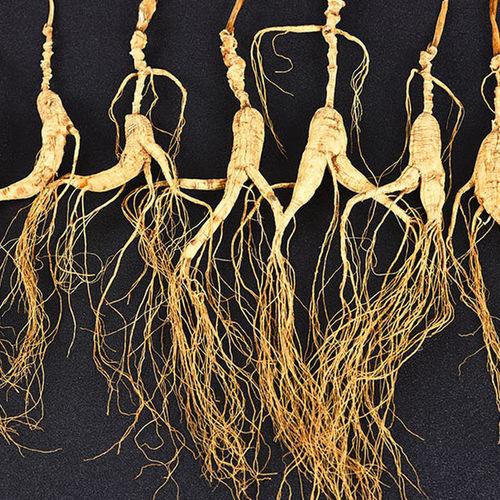 Changbai Mountain Wild Ginseng Root Transplanted Wild Ginseng