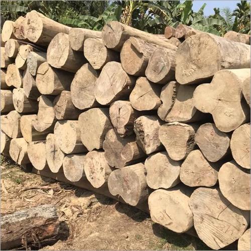 Mizoram Teak Logs