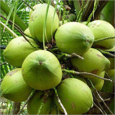 Full Coconut