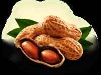 Ground Nuts In Peanut