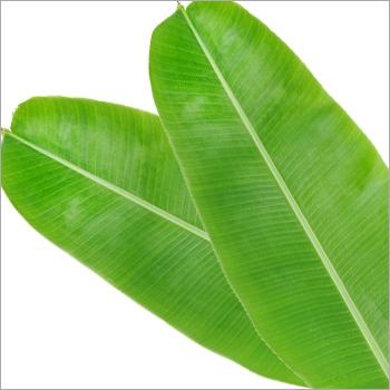 Bananana Leaf