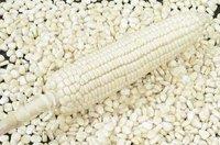White Maize
