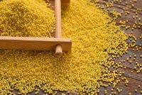 Yellow Bajra
