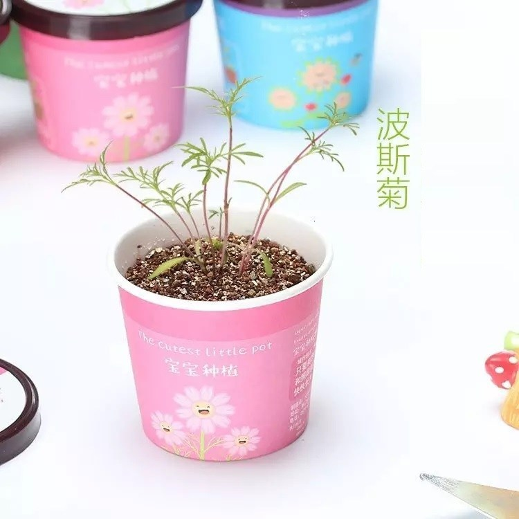 Office Desktop Mini Plant Pot