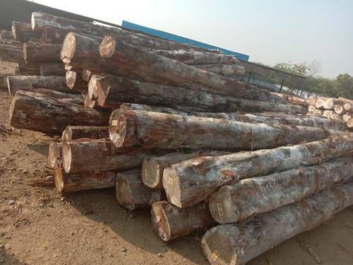 Brazil  Teak logs