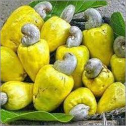 Fresh Cashews Kernel