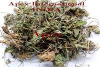 Brahmi Leaves