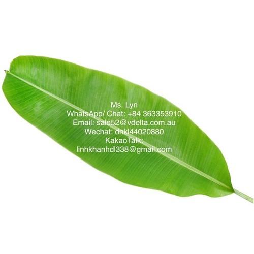 Fresh/ Dried Banana leaf