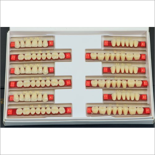 Synthetic Acrylic Teeth Set
