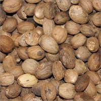 Indian Nutmeg