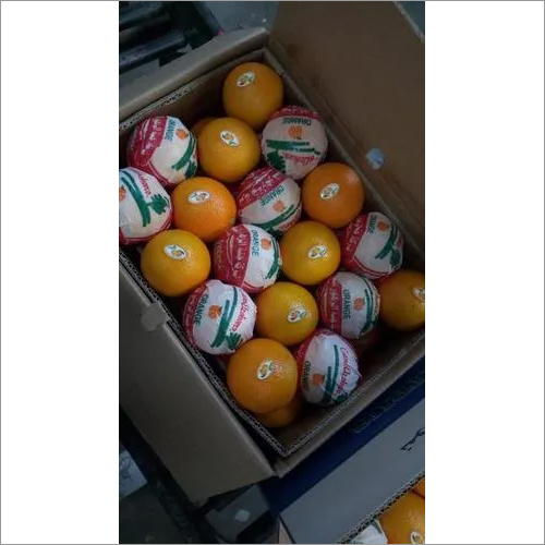 Egypian Valencia Orange
