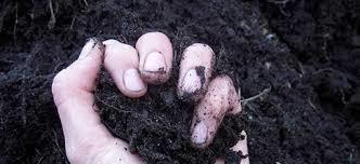 Organic Fungicides