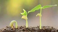 Plant Growth Regulator