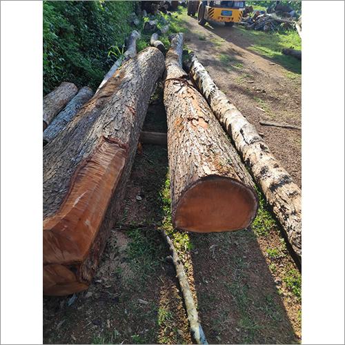 Mahogany Wood Log