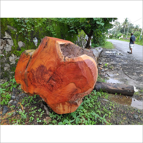 Jackfruit Wood Log