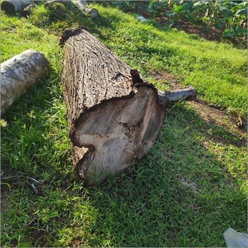 Acacia Wood Log