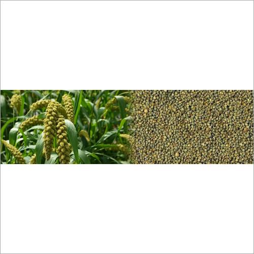 Natural Green Millet