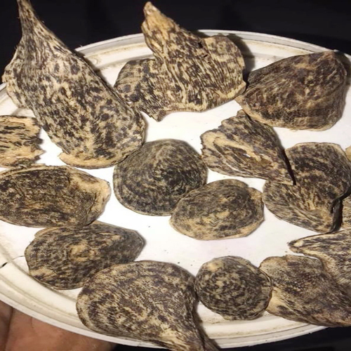 Agarwood Munipuri