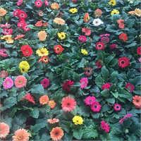 Winter Flower Plant