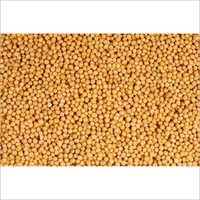 Natural Yellow Mustard Seed