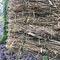 Dry Korai Grass