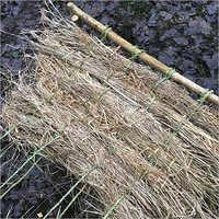 Dry Nut Grass